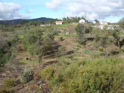 the part that was formerly used agriculturally, interspersed with fruit and olive trees, and cleared of invasive undergrowth (Nov. 2006)