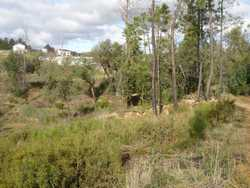 amongst the shrubbery, over 30 trees have been planted on the slope, which continues uphill to the right of what is visible here