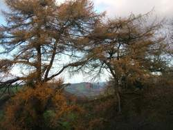 Tree planting in Llanidloes